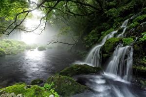 Фотография Водопады Камень Тумана Мха Ветка