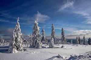 Фотографии Зимние Небо Снег Ели