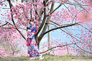 Обои Азиатки Цветущие деревья Кимоно Поза Смотрит Сакура молодая женщина