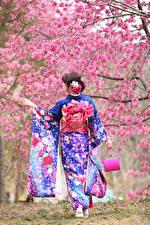 Картинки Азиатки Сумка Цветущие деревья Сзади Кимоно Сакуры молодые женщины