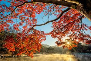 Картинки Осенние Пруд Пагоды Ветки Лучи света Туман Клён