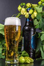 Обои Пиво Хмель Бокал Бутылки Пена Еда