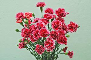 Фото Гвоздики Букеты Цветной фон Красная Цветы