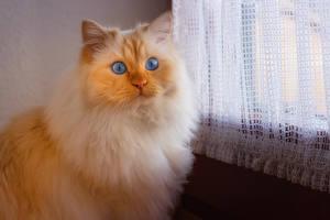 Обои Кошки Морды Взгляд Животные