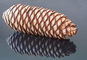 Фото Крупным планом Шишки Серый фон Отражении Pine Cone Природа
