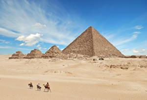 Картинки Египет Пустыня Верблюды Развалины Пирамиды Giza Природа