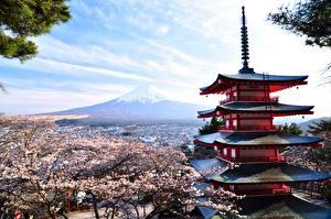 Обои Цветущие деревья Храм Япония Фудзияма Вулкан Honshu Природа
