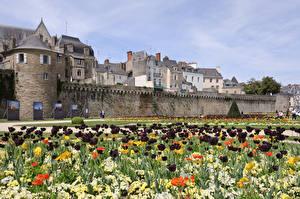 Фотографии Франция Тюльпаны Сады Van, Brittany Города