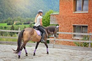 Фото Лошади Блондинки В шлеме Сидит Хвост девушка