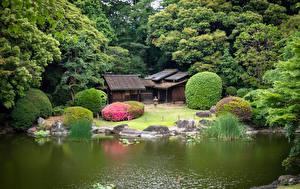 Фотографии Япония Токио Парки Пруд Дерево Ueno Park Города