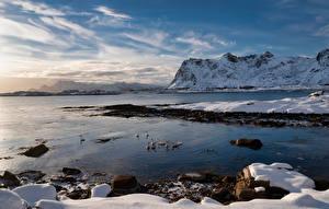 Фотография Норвегия Гора Лофотенские острова Побережье Гуси Снег Vestvågøya Природа Животные