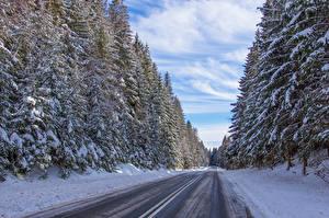 Фото Польша Зимние Дороги Леса Снег Ель Jabłonka Природа