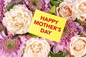 Фотографии Роза День матери Текст Английская Цветы