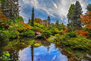 Обои Сиэтл Америка Сады Пруд Мост Кустов Дерева Kubota Garden Природа