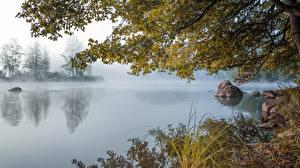 Обои Камни Озеро Утро Ветка Траве Туман Природа