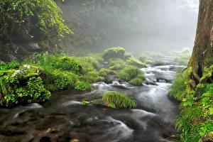 Фотография Камень Ручеек Мхом Траве Туман