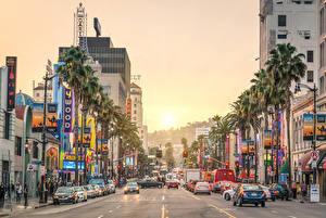 Фотография Рассвет и закат Штаты Дороги Лос-Анджелес Пальмы Уличные фонари Калифорнии Sunset Street Города