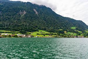 Фотографии Швейцария Здания Озеро Горы Лес Село village Arth, Lake Zug Природа