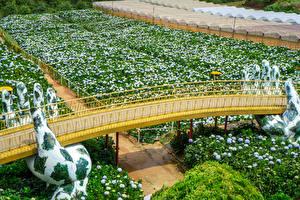 Фото Вьетнам Сады Мосты Гортензия Скульптура Hydrangea Garden in Da Lat Природа