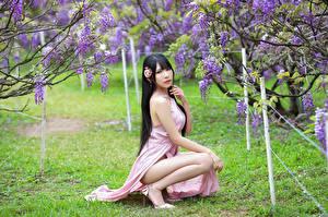 Фотография Азиатки Цветущие деревья Брюнетка Сидит Платья Взгляд молодые женщины