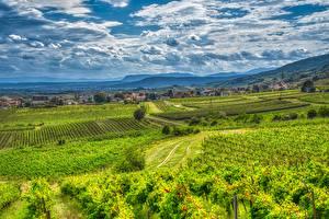 Фотографии Австрия Гора Виноградник Облако Альпы HDR Gumpoldskirchen