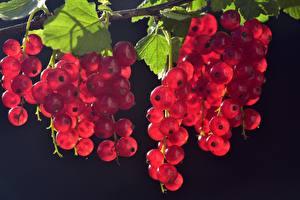 Картинки Ягоды Много Смородина Красных Листья Природа