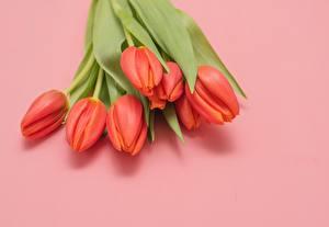 Обои для рабочего стола Букет Тюльпан Розовый фон Красная цветок