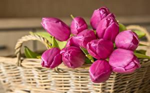 Фото Букеты Тюльпан Корзинка Розовая Цветы
