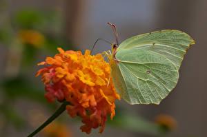 Картинка Бабочка Насекомые Размытый фон