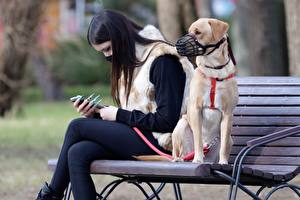 Картинка Собаки Маски Коронавирус Скамья 2 Брюнеток Сидит животное