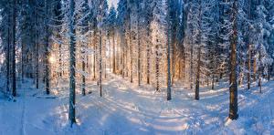 Фото Финляндия Леса Зимние Снегу