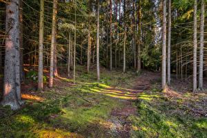 Картинка Лес Дерево Мха Природа