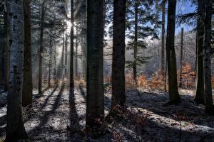 Картинка Лес Деревьев Лучи света Природа