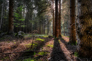 Фото Германия Леса Дерева На ветке Тень Hinterberg Природа