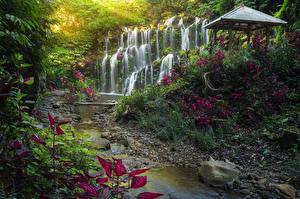 Фотография Индонезия Тропический Водопады Камень Скала Ручеек Bali