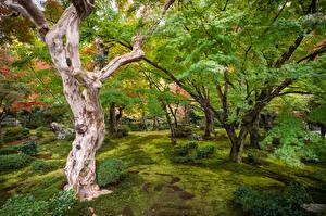 Картинка Япония Киото Сады Деревьев