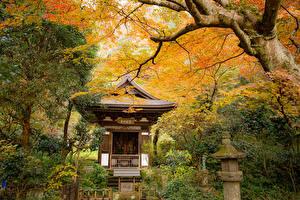 Фотографии Япония Киото Парк Осенние Пагоды Дерево Природа