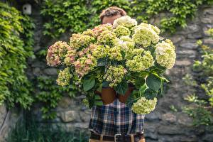 Картинки Мужчина Букет Гортензия Боке цветок
