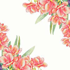 Картинки Рисованные Шаблон поздравительной открытки Белый фон цветок