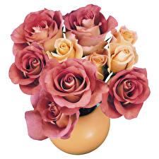 Обои Розы Букет Вазы Белый фон Цветы