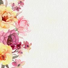 Фотографии Роза Рисованные Бумага Шаблон поздравительной открытки Цветы