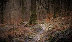 Фотография Шотландия Леса Дерева Мох Иней Galloway