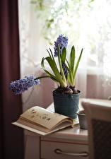 Картинка Натюрморт Гортензия Цветочный горшок Книга Цветы