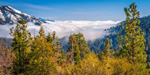 Фотографии США Парки Гора Калифорнии Облако Дерева Kings Canyon National Park Природа