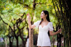 Фотография Азиаты Боке Позирует Платье Рука молодые женщины