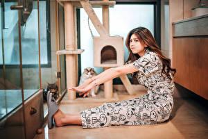 Картинки Азиатки Кошка Сидящие Шатенка Руки молодые женщины Животные