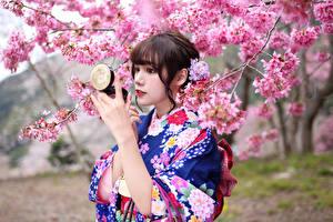 Фотография Азиаты Цветущие деревья Кимоно Сакура Девушки