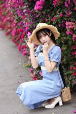 Фото Азиатки Позирует Сидящие Платья Шляпа Смотрит молодая женщина