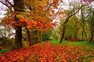 Фото Осенние Дуб Деревья Листья