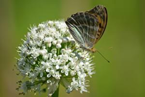 Фотографии Вблизи Бабочки Насекомое Размытый фон Животные